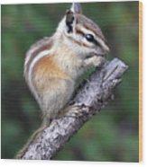 Hopi Chipmunk Wood Print