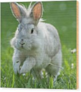 Hopping Rabbit Wood Print