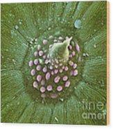 Hops Leaf, Sem Wood Print