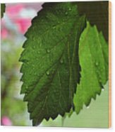 Hops Leaves Wood Print