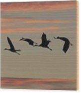 Horicon Marsh Cranes #2 Wood Print