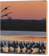 Horicon Marsh Cranes #5 Wood Print