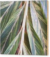 Horizon Of Palm Wood Print