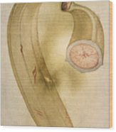 Horn Plantain, 1585 Wood Print