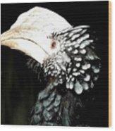 Hornbill Bird Wood Print