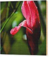 Horned Blossom Wood Print