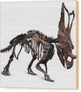 Horned Dinosaur Skeleton Wood Print
