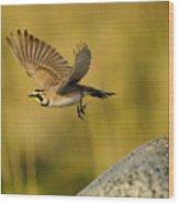 Horned Lark In Flight Wood Print