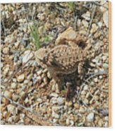 Horned Lizard Wood Print