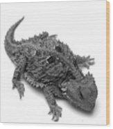 Horned Lizard  Wood Print