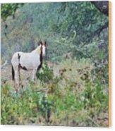 Horse 017 Wood Print
