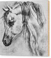 Arabian Horse 1 By Diana Van Wood Print