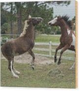Horse Aerobics Wood Print