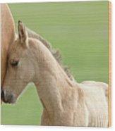 Horse And Colt Wood Print