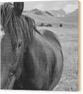 Horse And Sawtooth Mountains Wood Print