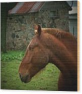 Horse And Shed Wood Print
