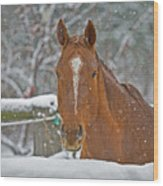 Horse And Snowflakes Wood Print