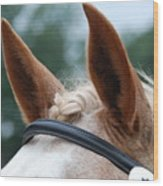 Horse At Attention Wood Print
