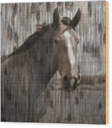 Horse At Home On The Range Wood Print