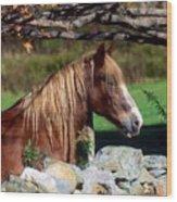 Horse At Stone Wall Wood Print
