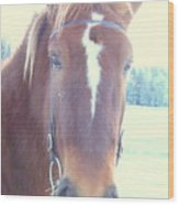 Horses Use Complex Facial Expressions Nearly Identical To Humans  Wood Print by Hilde Widerberg