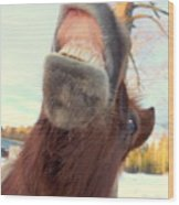 Horse Facial Expressions Are Nearly Identical To Those Of Humans Wood Print
