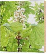 Horse Chestnuts Wood Print