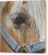 Horse Close Up Wood Print
