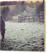 Horses On A Frosty Pasture Wood Print