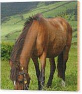 Horse Grazing Wood Print