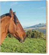 Horse Head Closeup Wood Print