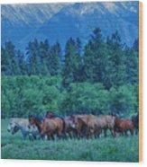 Horse Herd Wood Print
