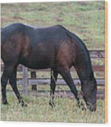 Horse In A Pasture Wood Print