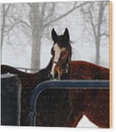 Horse In A Snowstorm Wood Print