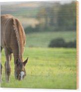 Horse In Field Near Ballyvaloo, Blackwater, Wexford Wood Print