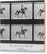 Horse In Motion, 1878 Wood Print
