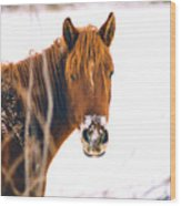 Horse In Winter Wood Print