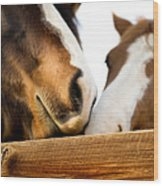 Horse Kisses Wood Print