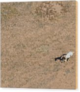 Horse On Canyon Floor Wood Print