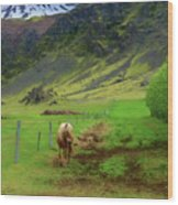 Horse On The South Iceland Coast Wood Print