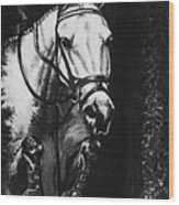 Horse Painting  Jumper No Faults Black And White Wood Print