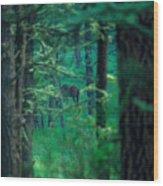 Horse Peek Wood Print