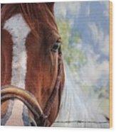Horse Portrait Closeup Wood Print