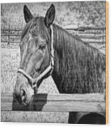 Horse Portrait In Black And White Wood Print