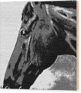 horse portrait PRINCETON black and white Wood Print