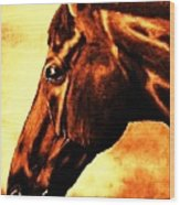 horse portrait PRINCETON brown tones Wood Print