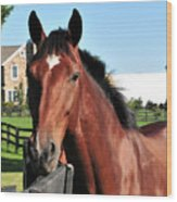 Horse Profile Wood Print