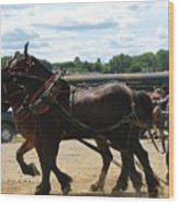 Horse Pull B Wood Print
