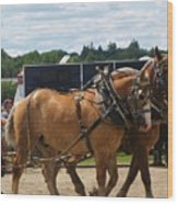 Horse Pull I Wood Print