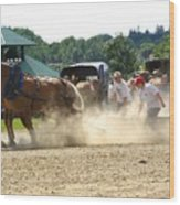Horse Pull In St Stephen Nb Wood Print